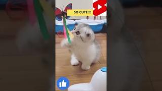 CUTE AND FUNNY BABY CAT ENJOYING #SHORTS