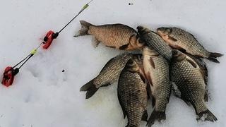ГОЛОДНЫЕ КАРАСИ ТОПЯТ УДОЧКИ! Взял много насадок, а ловят только эти! Ловля карася со льда