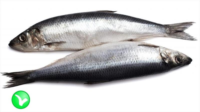 СЕЛЕДКА Полезна или вредна на самом деле соленая рыбка для организма человека