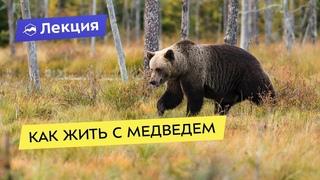 Как жить с медведем