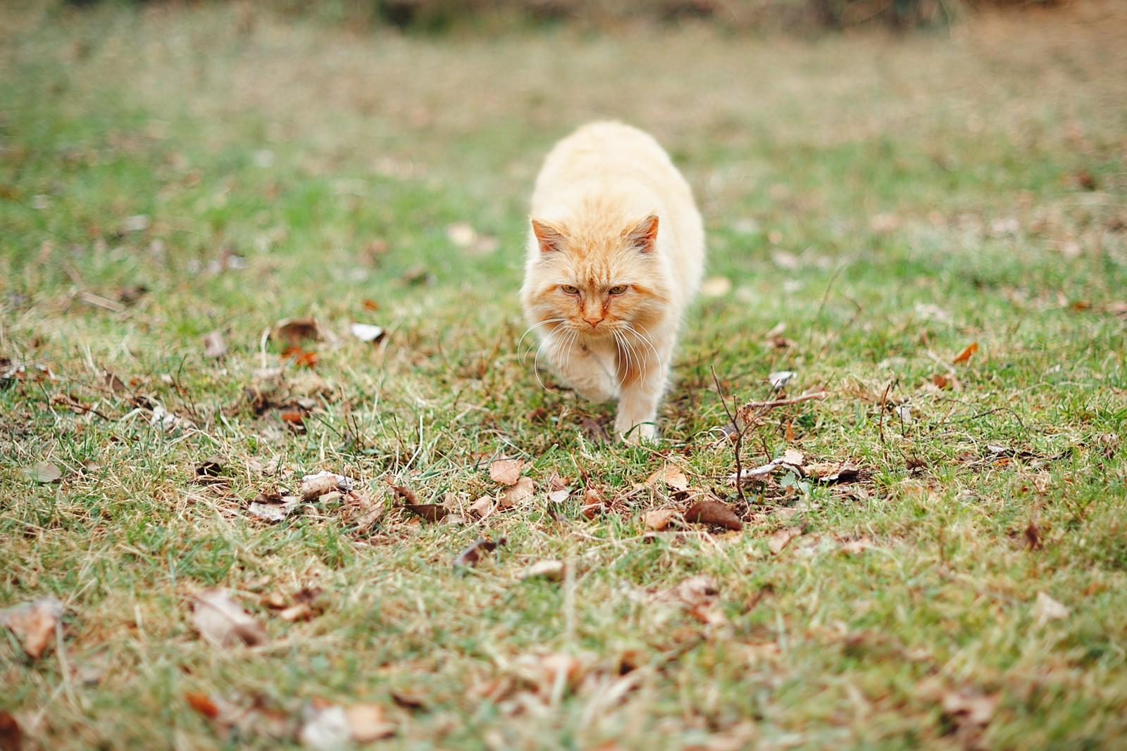 Кот! Просто кот! Фото Сергея Бессонова