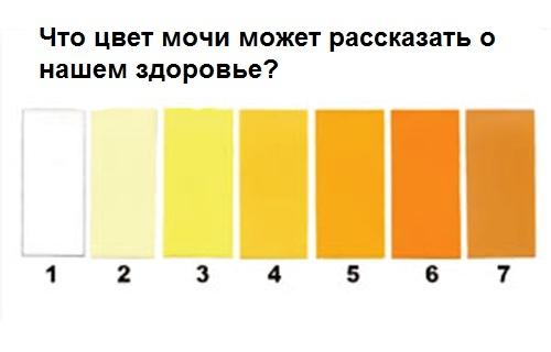 Цвет урины расскажет о вашем здоровье  Знаете ли вы? Хотя...