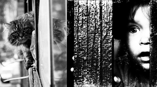 Девятилетняя вдова кролика и морской свинки, изображение №1