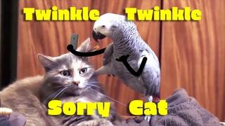 Twinkle, Twinkle - Sorry Cat