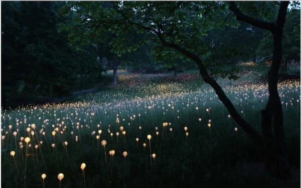 Брюс Мунро. Британский художник талантливо проектирует ландшафтный и домашний светодизайн, светильники любых форм и размеров, но широкую известность ему принесли его грандиозные
