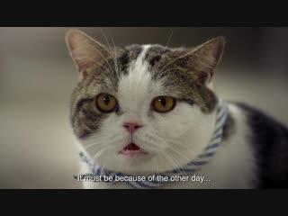 Смешная тайская реклама о домашних кошках