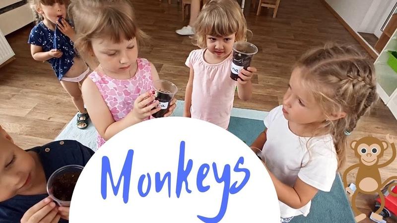 Monkeys Обезьянки Средняя группа Города Мечты