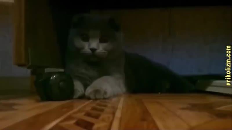 Приколы с кошками и котами 1 Кот сосущий соску 720 X 1280 mp4