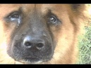 Hachiko the true story of a loyal dog - I can`t try to not cry!