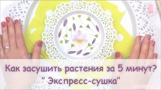 ЮВЕЛИРНАЯ СМОЛА || Сушка растений. Сухоцветы за 5 минут! How to press flowers in a microwave