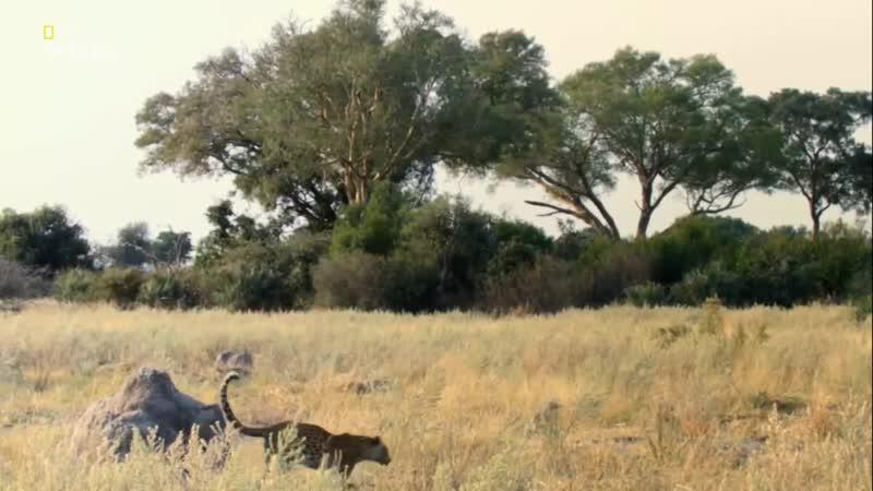 National Geographic Wild HD Выжить в дикой природе