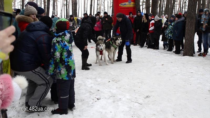 Короткий репортаж Winterdogfest Winter dog fest 2019 Песочин 10022019 собаки зимнии забавы