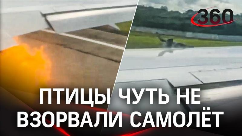 Видео самолёт столкнулся с птицами Рейс Варадеро Москва вернулся обратно