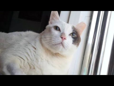 Sweet Cat is Getting Older Cheer UP Cary