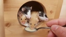 Just some cute little Mice eating Porridge