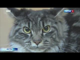 В Тюмени больную коронавирусом кошку отправили на двухнедельную самоизоляцию