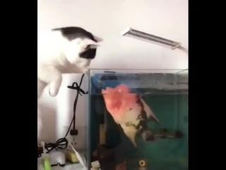Рыба какая-то неправильная пошла...