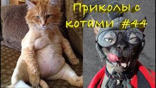 Смешные КОТЫ #44 / Лучшие приколы 2021 / Funny cats.