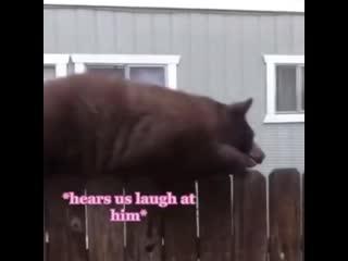 У нас на улице завелись котики 😳😹