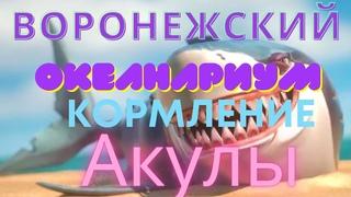 """Воронежский Океанариум - в Сити Парке «Град». Voronezh Aquarium - in the city Park """"Grad"""""""