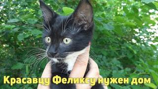 Красивый, Умный, Ласковый и Позитивный котенок ФЕЛИКС в добрые руки! Ищем Дом и Лучшего Хозяина!!!