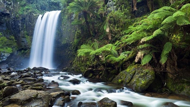 Дикие животные 24 часа 9 серия Тасмания остров дьявола