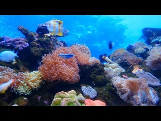 FREE TEN MINUTE MUSIC VIDEO WITH STUNNING NATURE CLIPS (2)