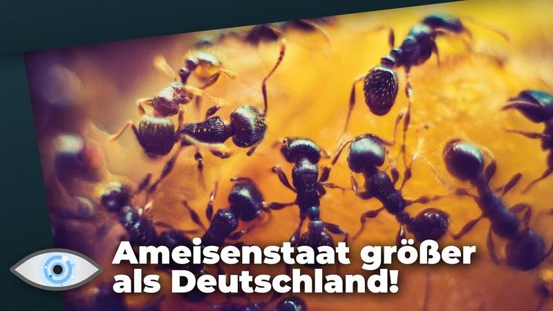 Mysteriöses Phänomen 5.000 Kilometer lange Ameisen-Super-Kolonie reicht von Italien bis Spanien!