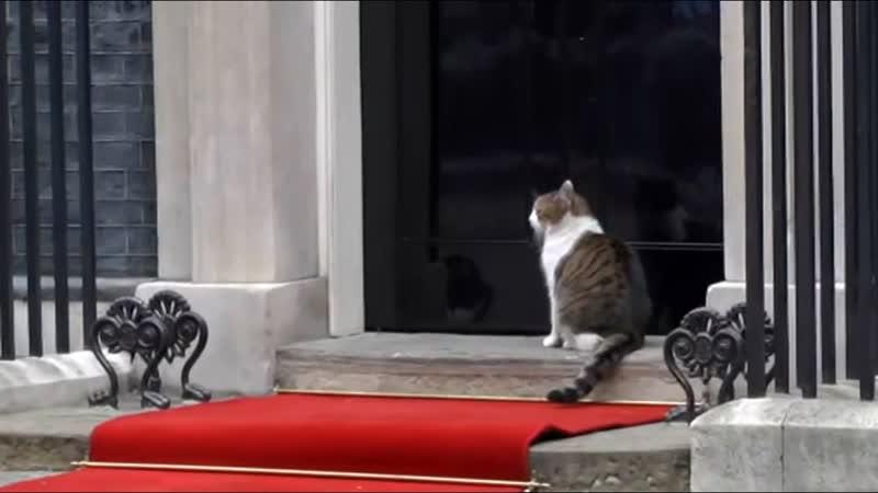 Это для меня Кошка на Даунинг-стрит прогуливалась по красной дорожке Трампа!