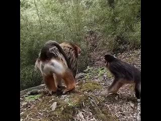 Дикие животные / wildlife video