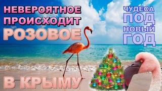 Крым 2020 Операция Розовый Фламинго Межводное