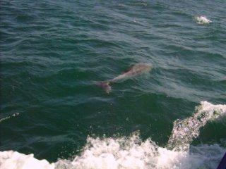 Сбежавший из Дельфинария