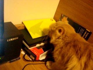 Кошка ма самоубиться хочет