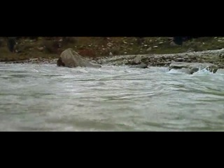 The Bear - Film by Jean-Jacques Annaud