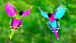 সবথেকে সুন্দর ৫টি ঈশ্বরের পাখি | 5 Most Beautiful Unique Exotic Birds of Paradise In The World!