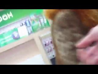 Прикольное видео!Бабка хочет раскладушечку с флешечкой2! Смешные приколы 2014!Смешное видео!