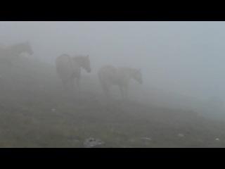 Лошадкаааа