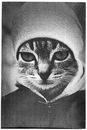 Личный фотоальбом Светы Ильевской