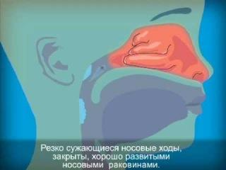 Строение слизистой оболочки носа
