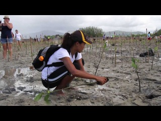 Mangrove Planting in Honour of Her Majesty the Queen