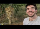 Steve Grand: Don't Eat Me! We can be friends, Mr. Lion DD