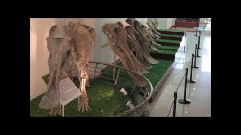 Кто такие мамонты Эволюция отряда хоботных