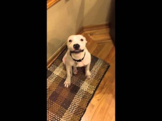 """Dog Smiles For The Camera """"Say cheese"""" 