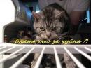 18 hellcat/Кот в холодильнике ! Блять что за хуйня !