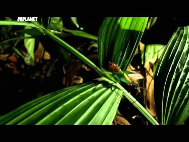 Войны жуков гигантов Monster bug wars Мать всех войн