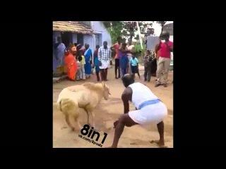 Баран мстит за удар мачете по голове, фэйл / Indian way of beheading - ram revenge