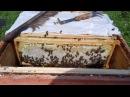 Медосбор-Качка/ Один день из жизни пчеловода