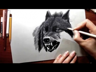 Pencil Drawing- Black Wolf Speed Draw - Jasmina Susak How to Draw a wolf