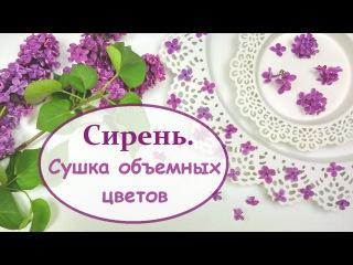 ЮВЕЛИРНАЯ СМОЛА || Как засушить сирень? Объемная сушка || How to dry a lilac?