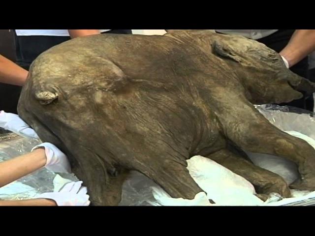 Un animal que desafía la arqueología bíblica